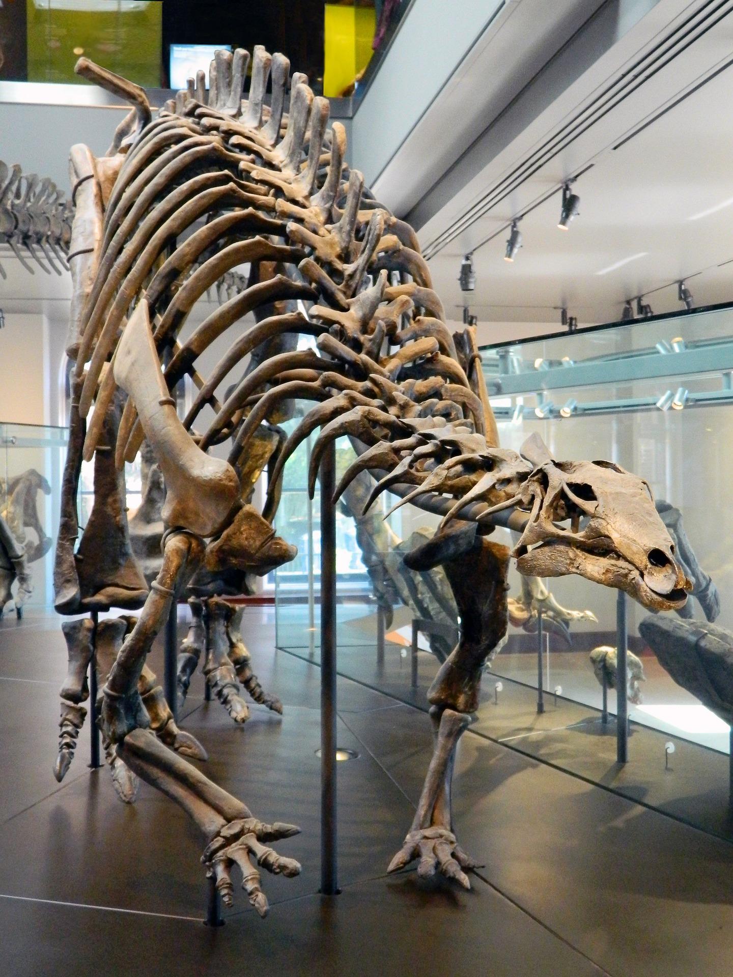 Dinosaurier Museum Nrw